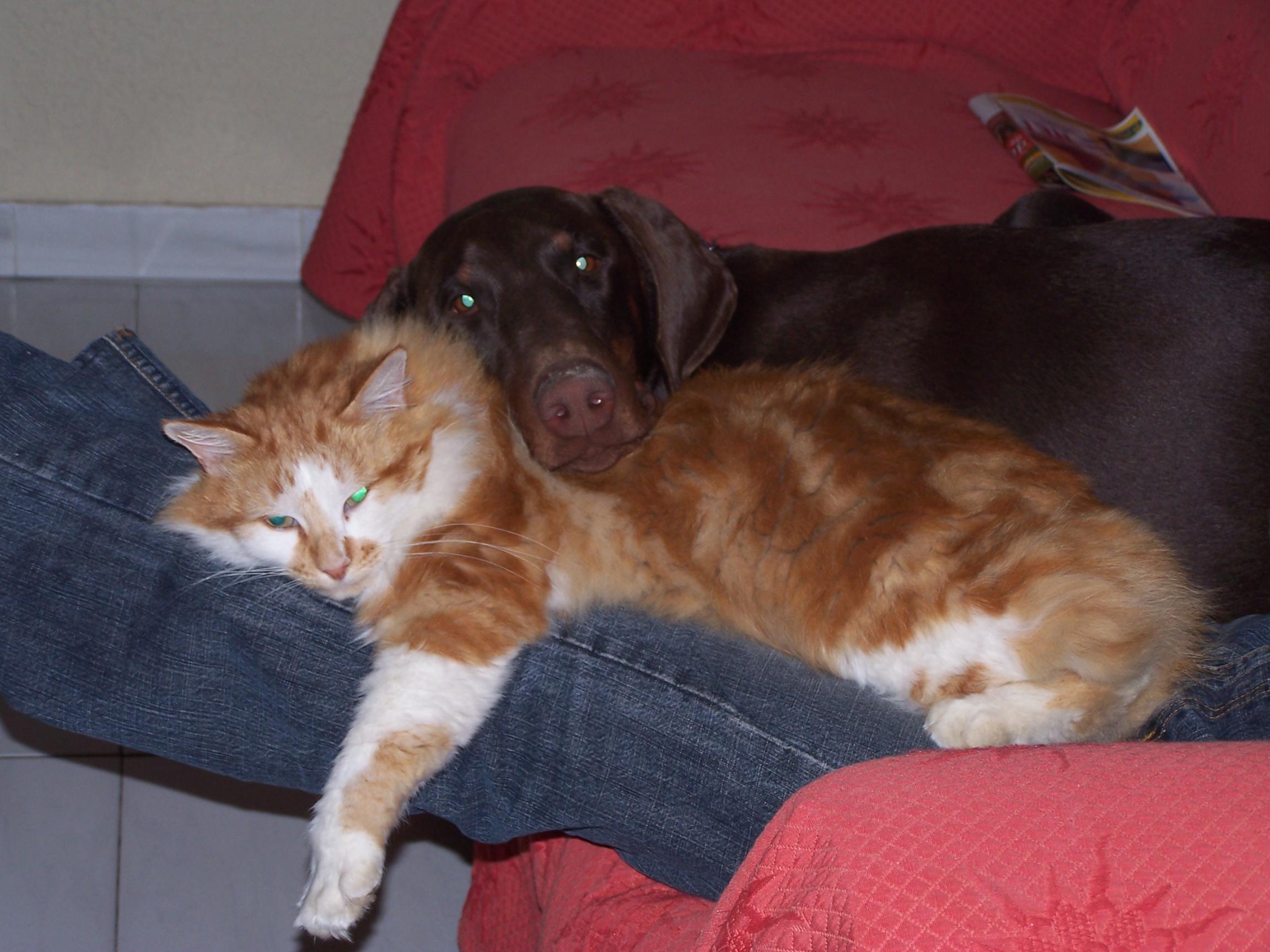 problème cohabitation entre chien et chat