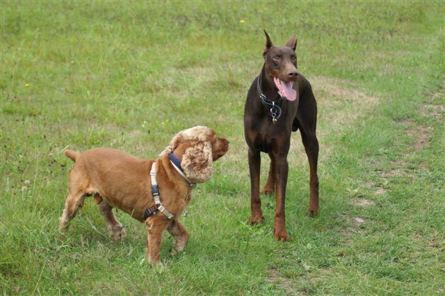 postures et code canin