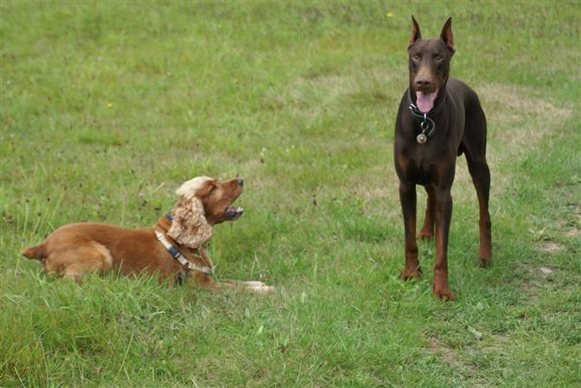 formation au comportement canin