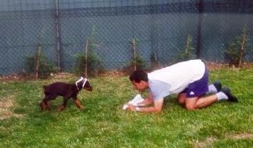 rencontre chiot et chien adulte rencontre adulte versailles