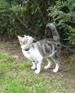 chat adulte, chat quart d'heure de folie, chaton qui fait des bêtises