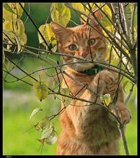 chat qui sort dehors