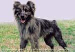 problème de comportement avec chien berger des pyrénées