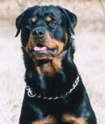 permis pour chien de 1er et 2 eme catégorie
