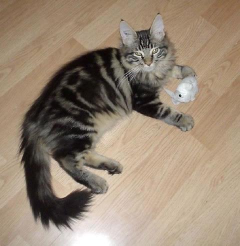 les stades de d veloppement et de croissance du chaton comportementaliste chat 75 77 78 91. Black Bedroom Furniture Sets. Home Design Ideas
