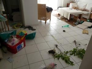 chien destructions, chien destructeur, chien ne supporte pas de rester seul, chien qui fait des bêtises, chien qui fait des dégâts, chien qui détruit
