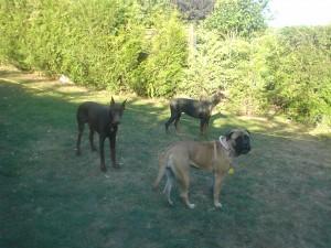 Garde et éducation chien à domicile