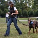 brevet obéissance chien, éducateur canin