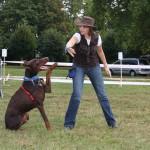 chien hyperattachement, chien hypersensible, chien hyperactivité