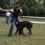 activité canine, activité avec son chien, concours d'obéissance canine