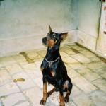 chien adulte adoption spa rééducation avec éducateur canin et comportementaliste