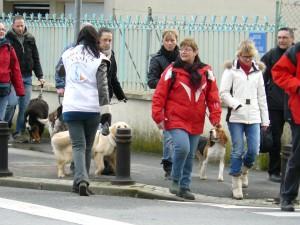 cours d'éducation canine collectif, sociabilité chien