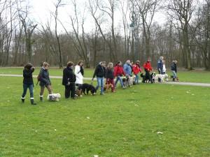 cours de sociabilité chiens, cours collectif, club canin 77, 78, 91, 92, 93, 94, 95, 75