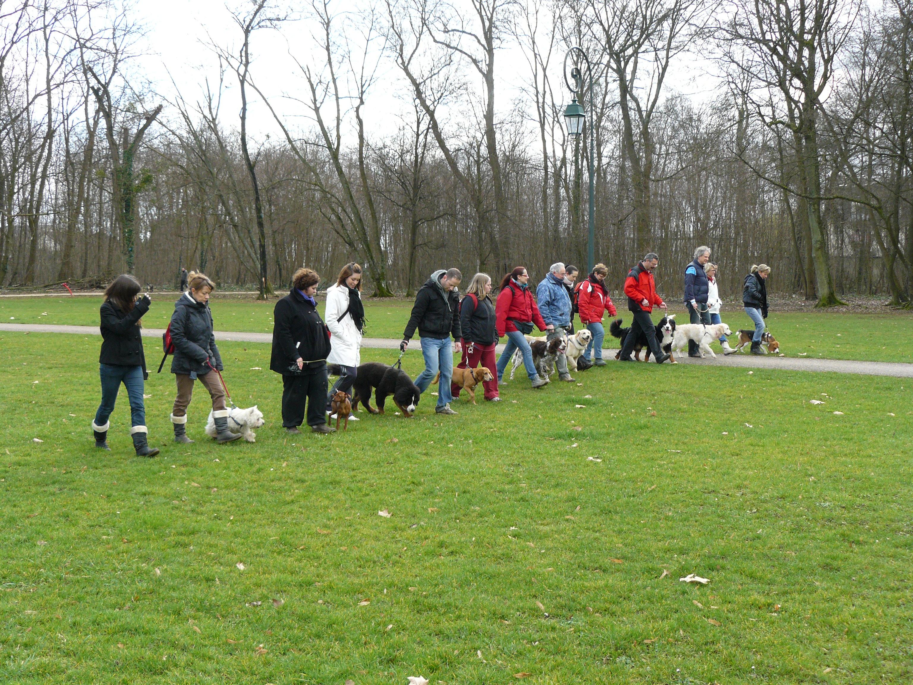 Club rencontre pour chien