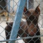 chien adoption en refuge choix avec educateur canin et comportementaliste