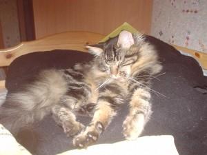 garde chat à domicile
