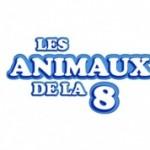 émission les animaux de la 8 avec Sandrine Otsmane éducateur canin et comportementaliste chien et chat