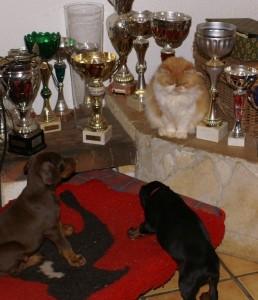 bagarre entre chien et chat