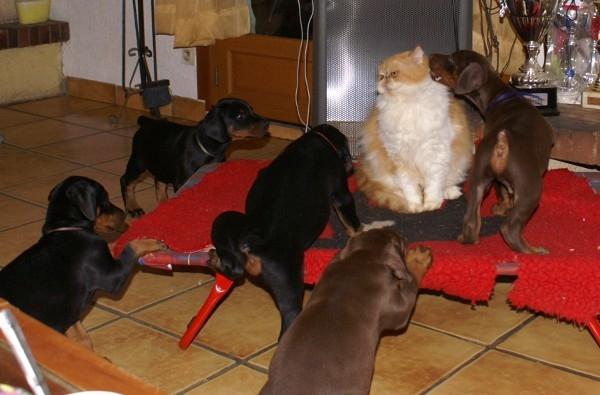 cohabitation entre chien et chat - educateur canin et