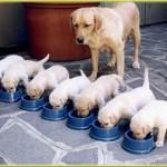 chiot de race en élevage test éducateur canin et comportementaliste chien