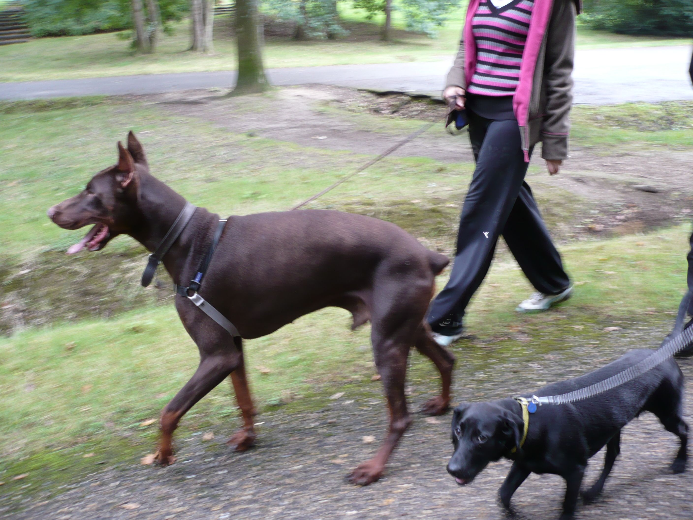 Rencontre chien adulte et chiot