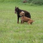 communication entre chien