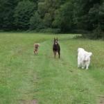 sociabilisation chien