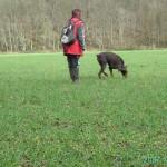 éducateur canin activité pistage