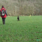 pistage chien, recherche utilitaire chien