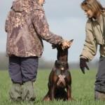 obéissance chien, dressage chien