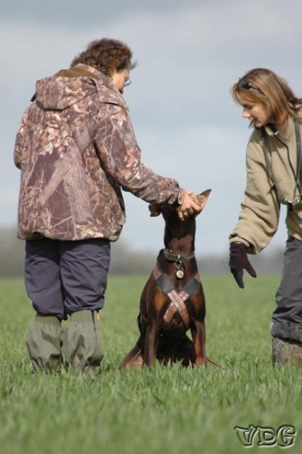 Activité avec son chien - Le pistage canin, pistage chiot