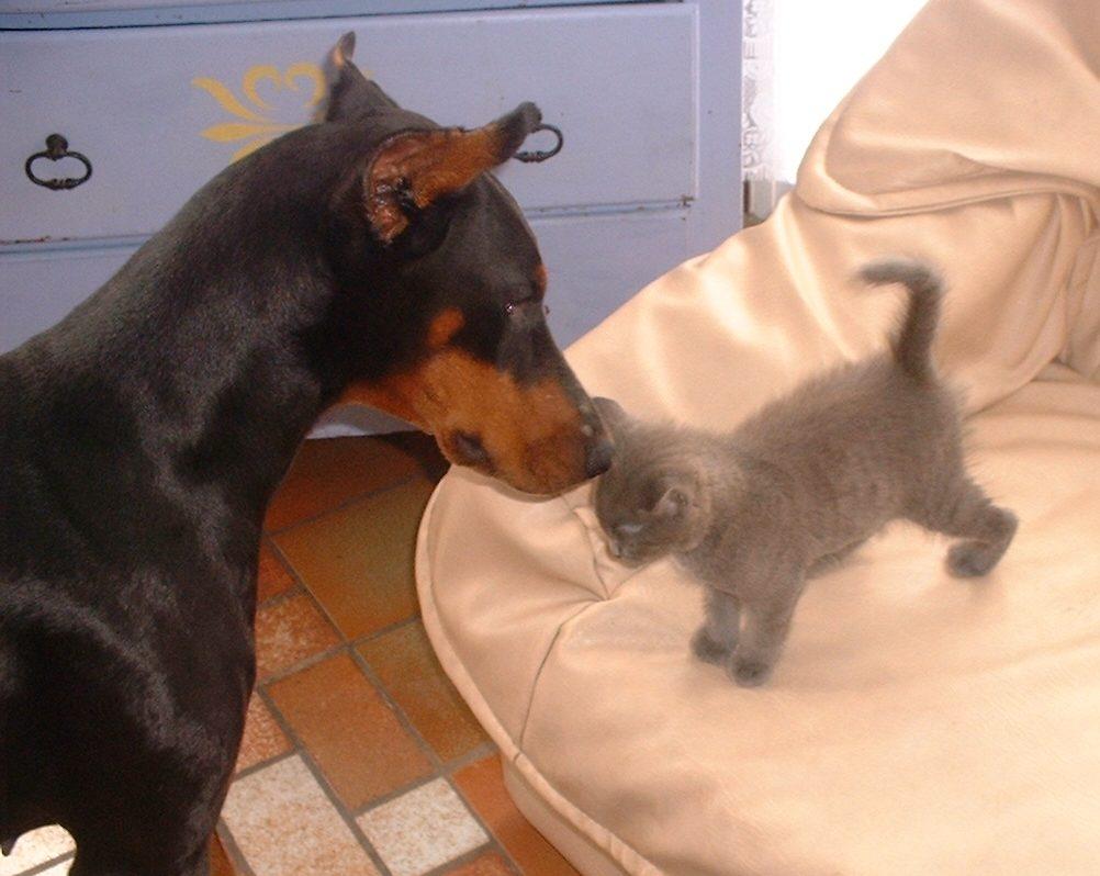 Rencontre chaton et chien [PUNIQRANDLINE-(au-dating-names.txt) 54