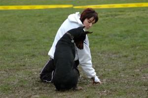 chien avec son maître, chien hyperattachement