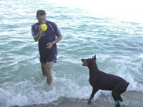 Comportement chien et la Relation Homme - Chien