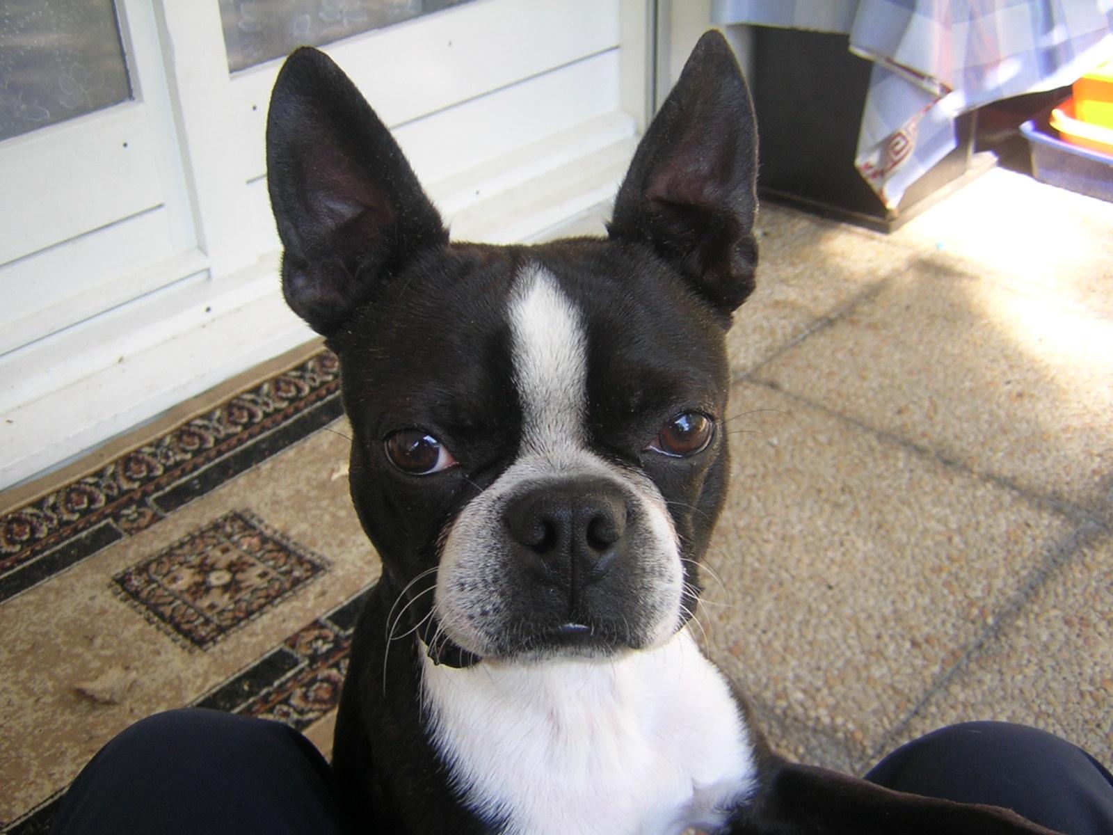 chien qui urine dans la maison cours avec ducateur canin et comportementaliste chien 77 et ile. Black Bedroom Furniture Sets. Home Design Ideas
