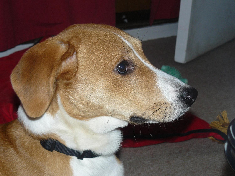 chien destructions chien aboiements intempestifs ducateur canin et comportementaliste chien. Black Bedroom Furniture Sets. Home Design Ideas