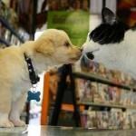 cohabitation chat et chien, agressivité entre chien et chat, problème d'entente entre chien et chat