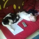 chat et nouveau né, enfant et chat, bébé et chat