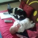 enfant et chat adulte, bébé et chat adulte, allergie chat, nouveau né avec chat