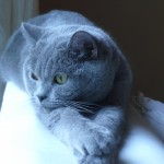 chat en zoothérapie