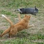 problème comportement avec chat