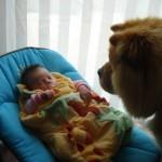 nouveau né et chien, arrivée enfant avec chien