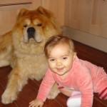 accident enfant avec chien, relation enfant avec le chien, chien qui a peur des enfants