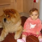 enfant en bas âge et chien, morsures chien sur enfant
