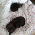 Bagarres entre chats
