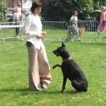 obéissance canine au clicker training
