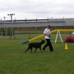 marche sans laisse marche au pied chien éducation chien