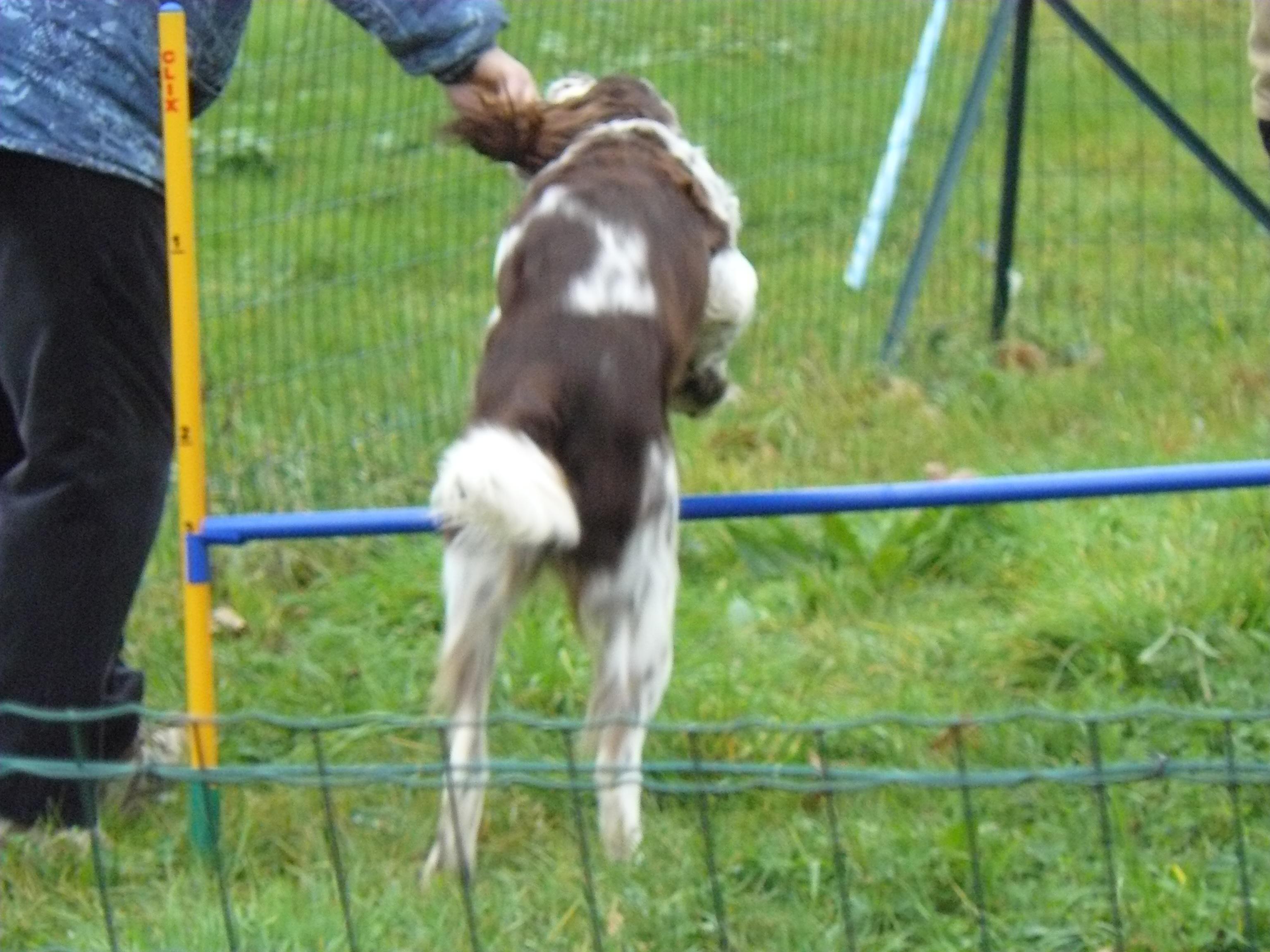 club canin agility 78