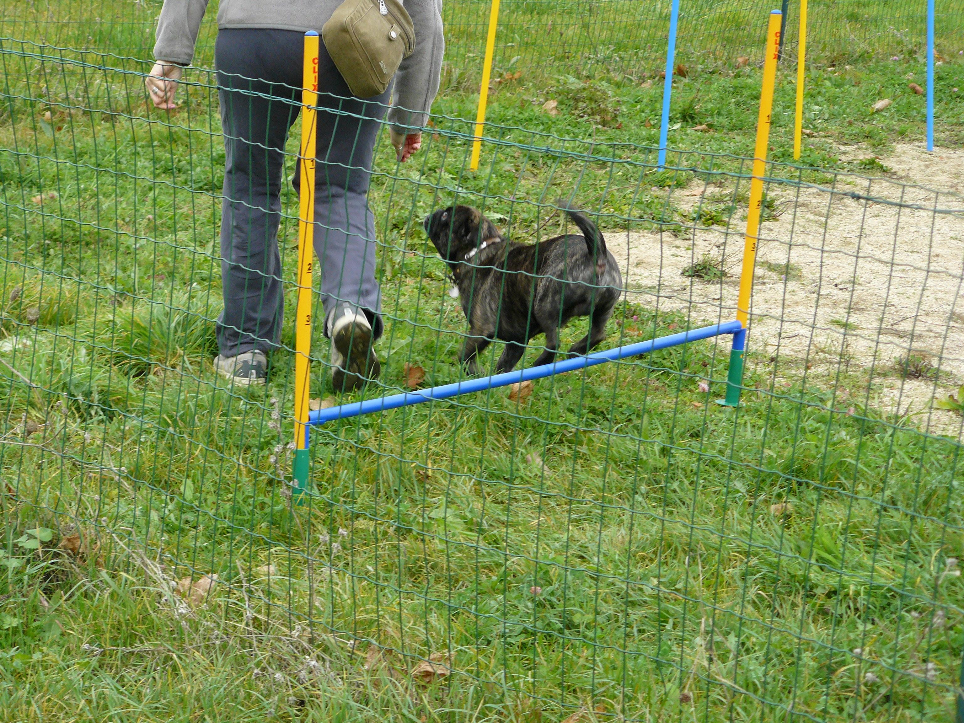 Cours agility, cours éducation canine, club canin Paris
