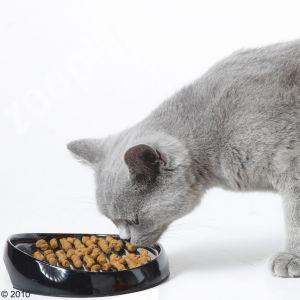 gamelle pour chat au museau court persan british shortair
